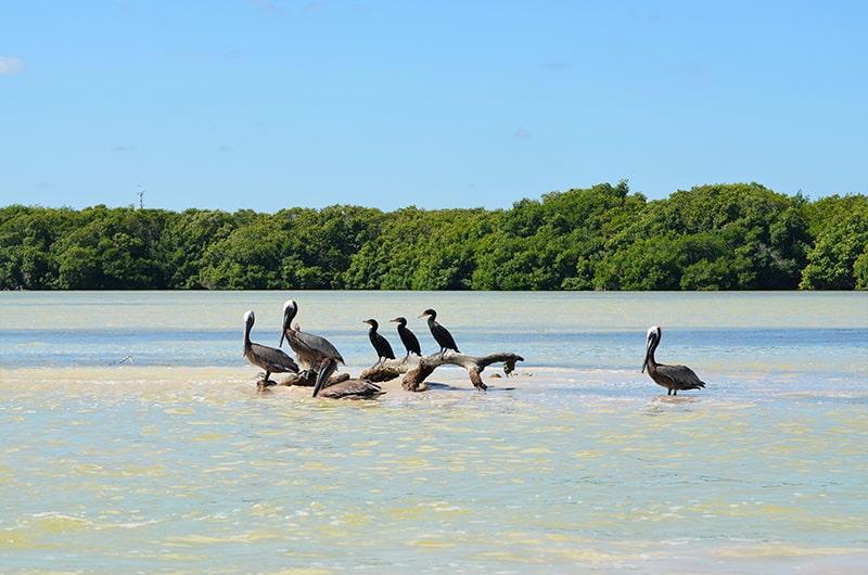 Le parc naturel de Rio Lagartos dans le Yucatan au Mexique