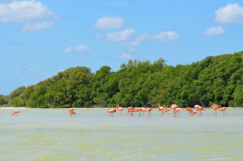 Rio Lagartos - Voyage au coeur de la péninsule du Yucatan au Mexique