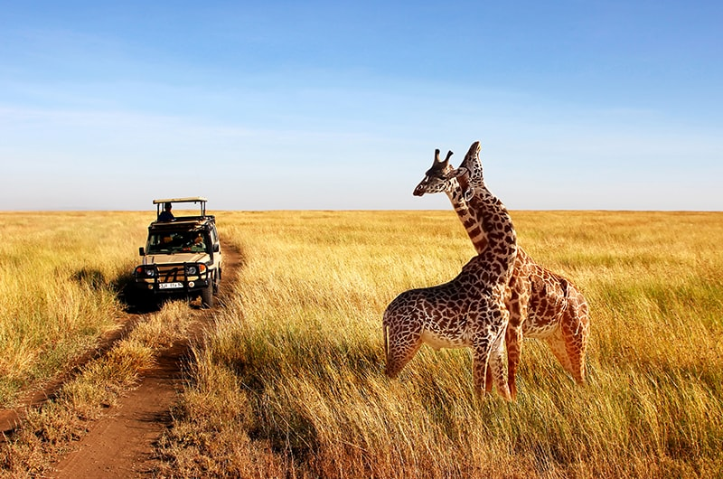 Comment bien réussir son safari en Afrique ?