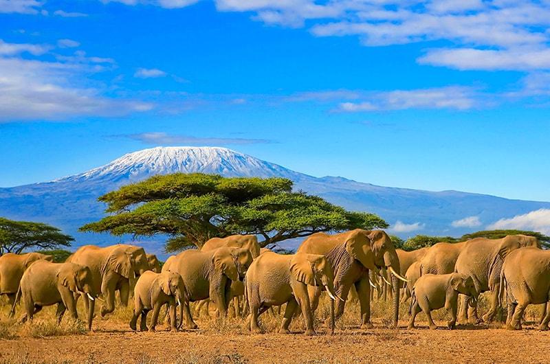 Comment bien réussir son safari dans la savane africaine ?