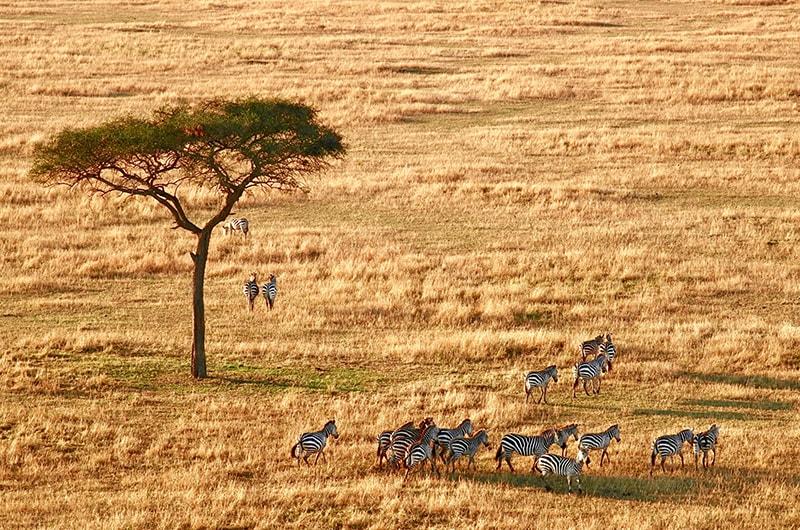 Tout savoir réussir son safari