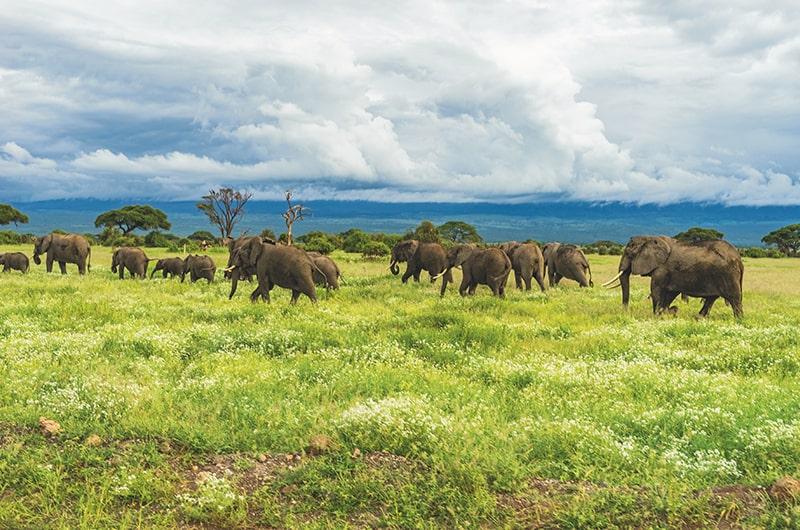 Bien préparer son voyage en Afrique