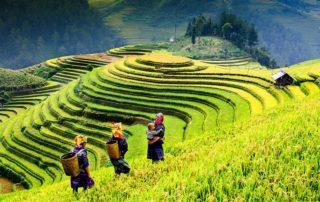 Découvrez les paysages montagneux du nord du Vietnam