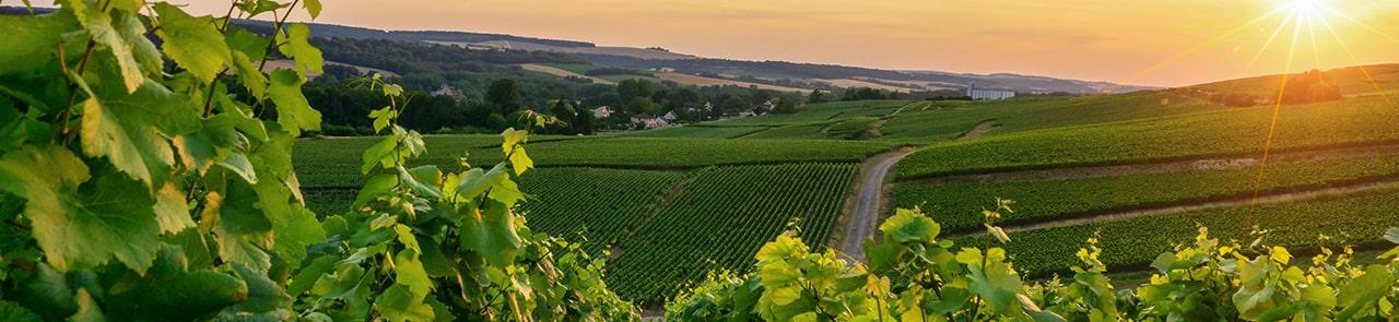 Dijon, une ville idéale pour le tourisme culturel