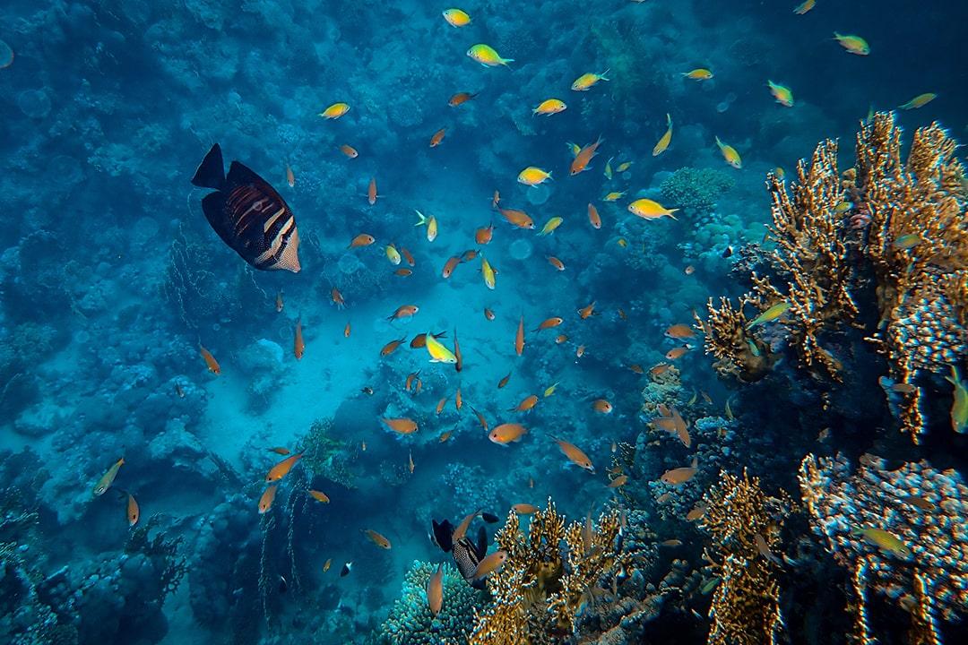 Sites de plongée en Indonésie