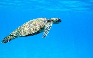 Évadez-vous lors de votre séjour au Mexique et découvrez les tortues à Akumal